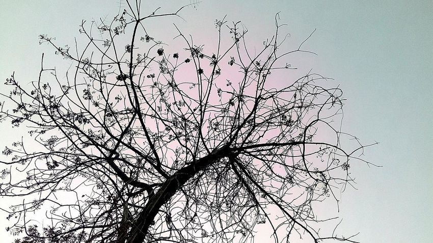 Autum Tree Without Leaves Mobile Photography SSClickPics SSClicks SSClickpix Sky Abstract Backgrounds Bird Flock Of Birds Flying Ink Large Group Of Animals