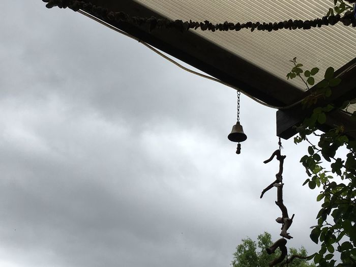 Low angle view of hanging from tree against sky