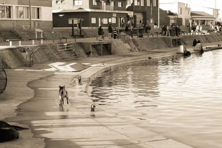 People walking by swimming pool in city