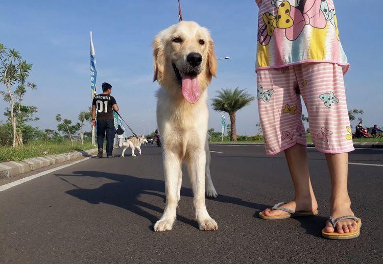 Full length of dog standing on road