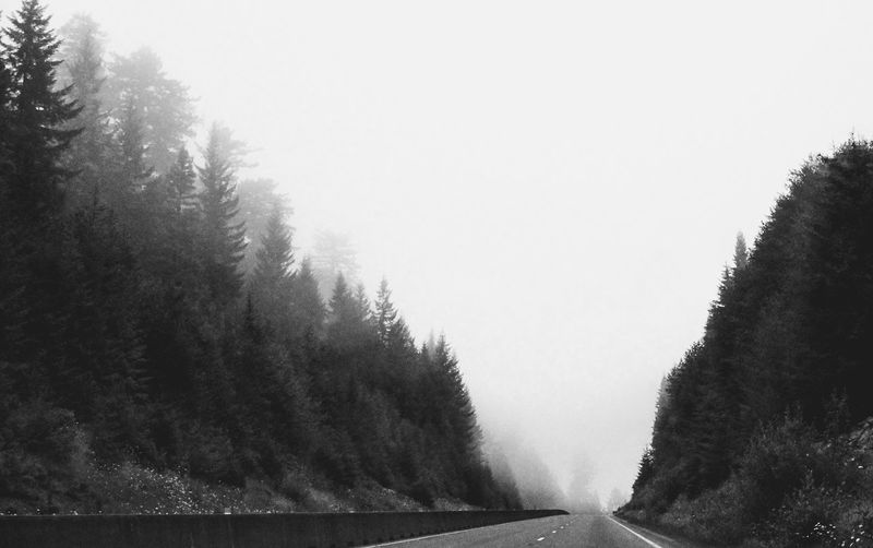 Black And White California Redwoods Road Trip Lost Places