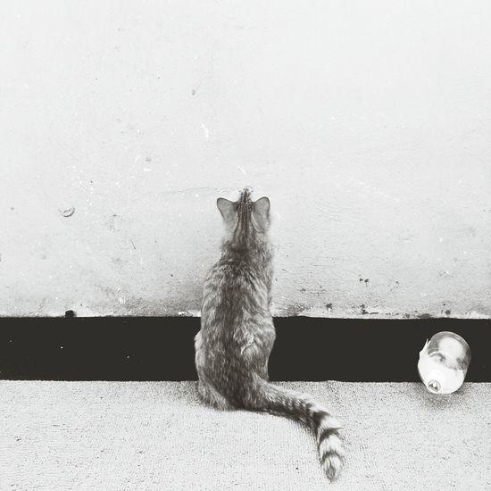 котэ Cat Cats Animals