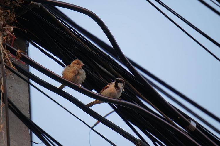 Electric Wire EyeEm Selects Bird Animal Animal Wildlife One Animal Animal Themes Animals In The Wild Perching