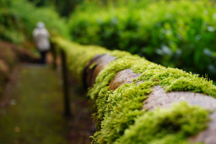 Beauty In Nature Close-up Day Forest Path Green Color Growth Moss Moss On Wood Nature Nature Path Outdoors Person In Background Plant Selective Focus Walkway EyeEmNewHere