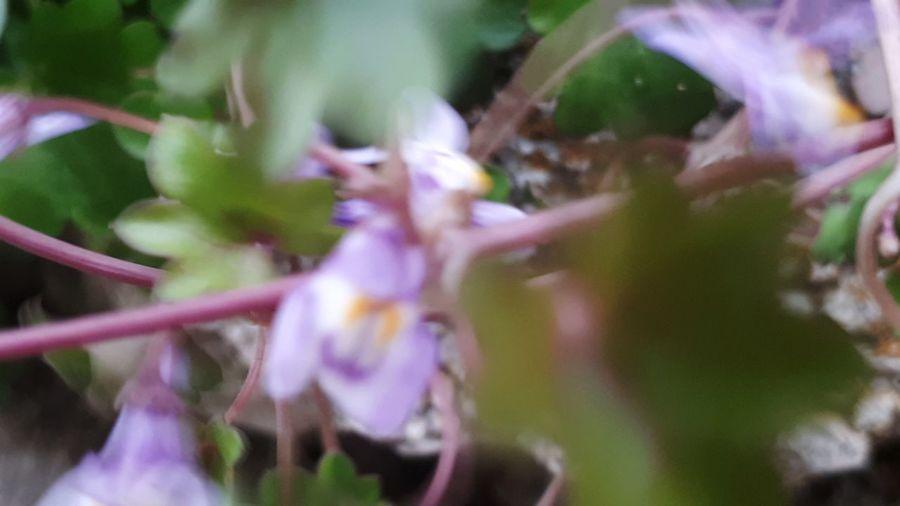 Tree Close-up Plant