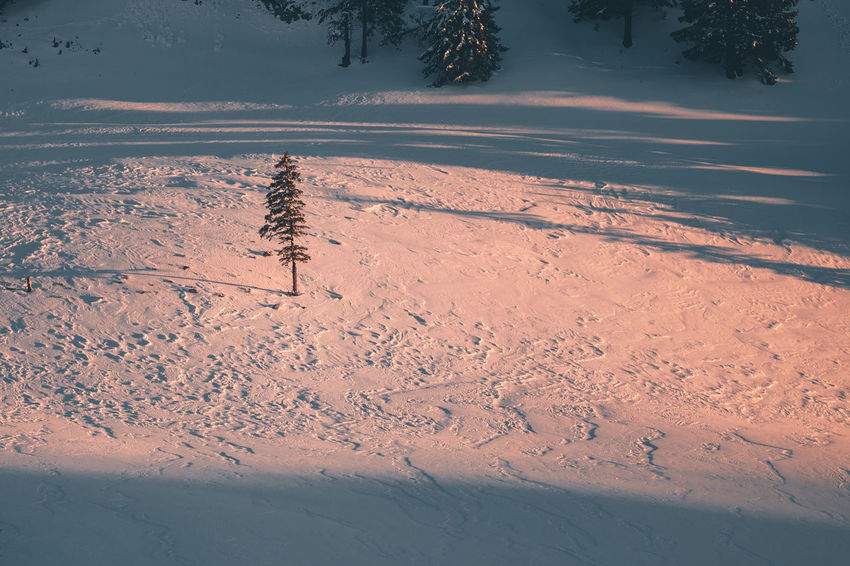 Beauty In Nature Cold Temperature Covering Day Environment Field High Angle View Land Landscape Nature No People Non-urban Scene Outdoors Plant Powder Snow Scenics - Nature Snow Snowcapped Mountain Tranquil Scene Tranquility Tree Winter