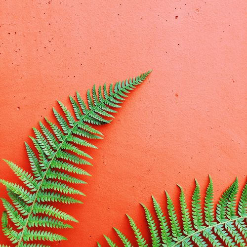 Ferns cross their fingers too. Abstract Minimalism Red Colorful Contrast Urban Spring Fever Nature Green EyeEm Nature Lover Adapted To The City