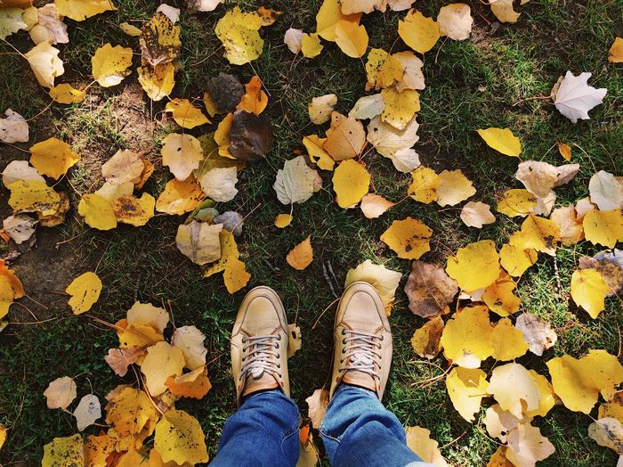 A touch of autumn 🍂... Fashion Fragility In Nature Autumn colors Leaves On The Ground Grass Weather Season  Park - Man Made Space Autumn Leaves Leaves Yellow Feet Leaf Autumn Fall Low Section Human Leg One Person Shoe Body Part Personal Perspective Standing Lifestyles Human Body Part Directly Above High Angle View Unrecognizable Person Leisure Activity Jeans Nature