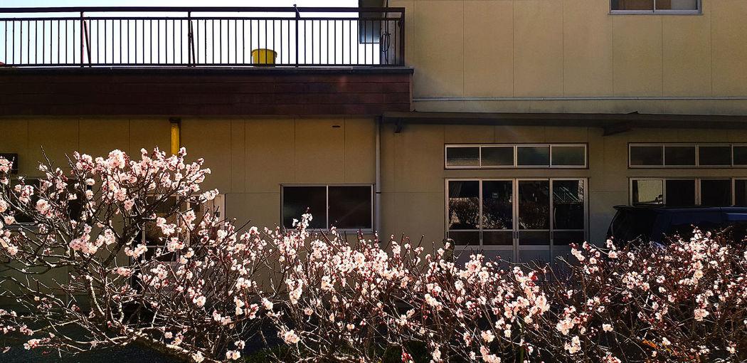 View of pink flowering plants against building