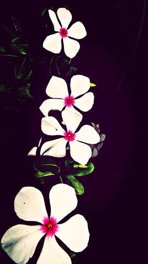 Nature Flowers :) In My Garden