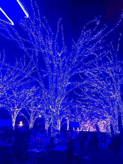 青の洞窟 Blue Tokyo Night Illuminated Decoration Light Tree Christmas Lights Lighting Equipment