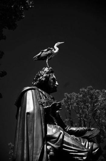 Stork occupying a statue Statue Thinker Philosopher Vandalism Bird Park Blackandwhite Black And White Black & White Amsterdam Vondelpark Netherlands Stork Monochrome Photography