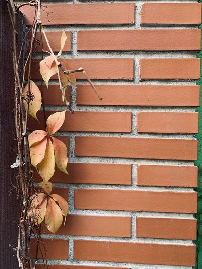 Close-up of dry leaves on brick wall