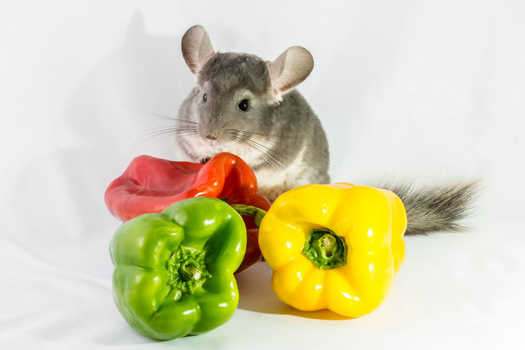 Close-up of rodent by bell peppers against white background