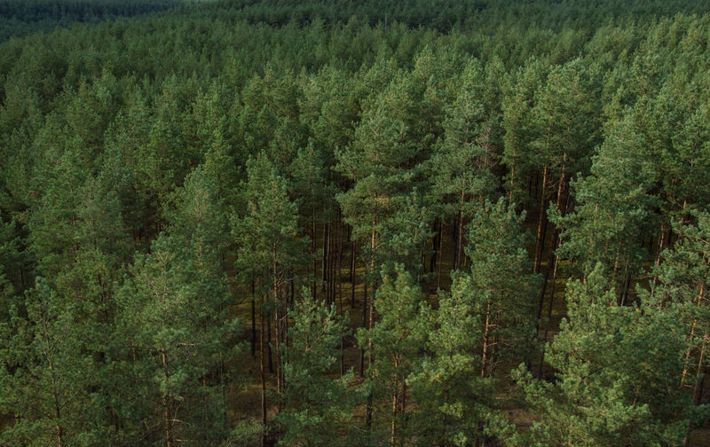 Green Growth Nature Trees Aerial View Background Forest Outdoors Lithuania Landscape Breathing Space