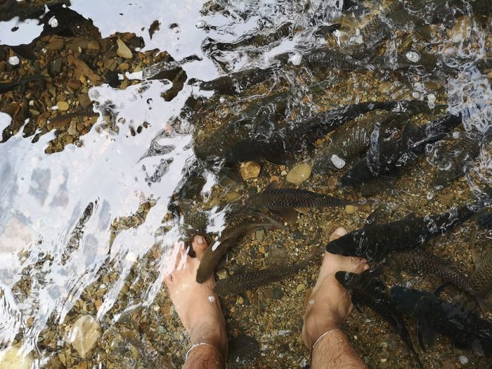 Fish spa for legs at ranau sabah Human Legs Fish Eating Fish Spa Low Section Water Human Leg High Angle View Close-up Personal Perspective Shore Ankle Deep In Water Wave Sandy Beach