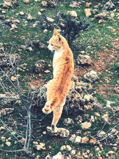 Cat Animal Domestic Animals Pets Domestic Cat Mammal One Animal Animal Themes Feline Cat Ginger Cat Nature Outdoors No People Day Grass First Eyeem Photo