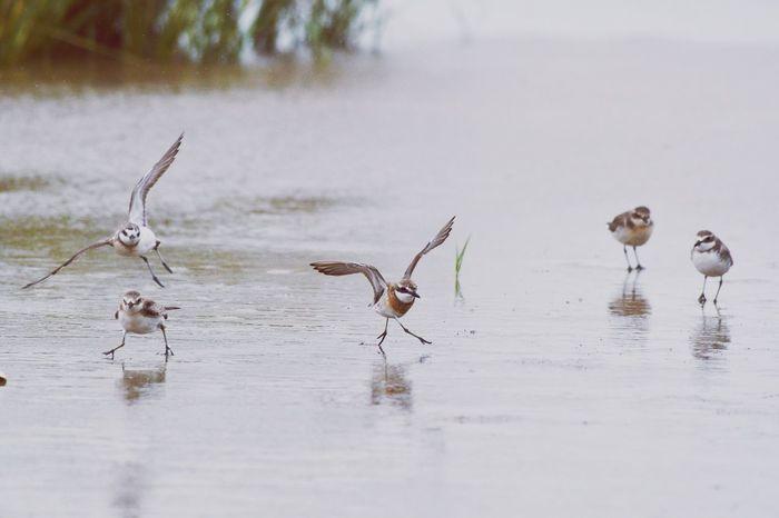EyeEm Selects Animal Wildlife Bird