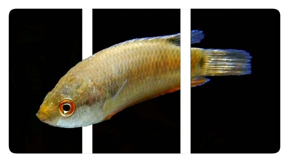 3D fish Fish Animal No People Close-up Indian Fish FishEyeEm The Week On Eyem Aquarium Nikon AW130 EyeEm Gallery EyeEm Best Shots EyeEm Nature Lover Fishplore Underwater Water Abstract Perspective 3D 3D Art 3D Using 2 Bars