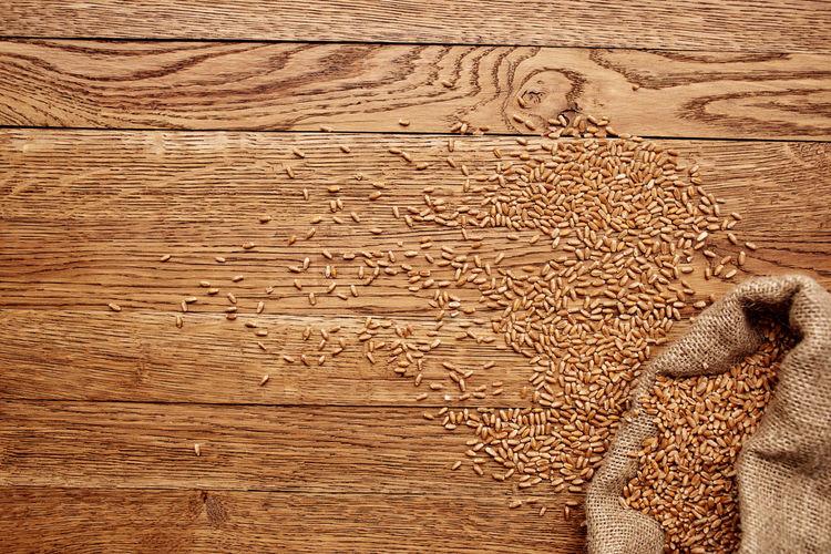 Portrait of cat on wooden floor