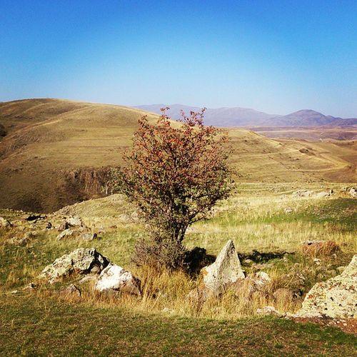Lonely Tree Armenia