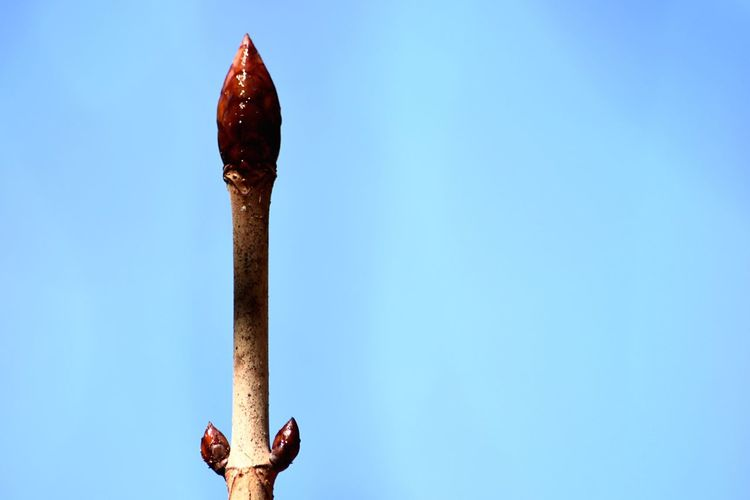 Close-up of bud growing against clear blue sky