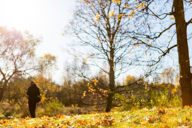 Autumn Backlight Beauty In Nature Day Nature One Person Outdoors Silhouette Sweden