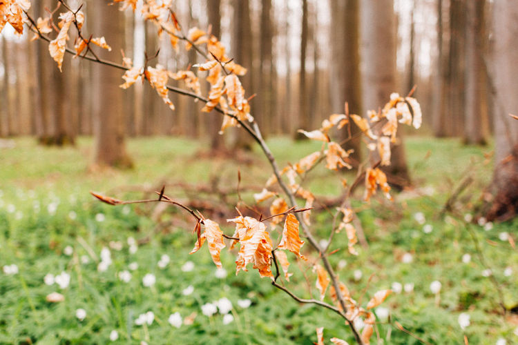 Autumn leftovers. Nature Thuringen Thuringia Autumn Beauty In Nature Branch Close-up Day Flower Flower Head Focus On Foreground Forest Fragility Freshness Grass Growth Leaf Nature No People Outdoors Plant Tranquility Tree