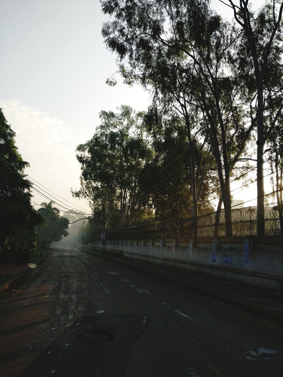 tree, road, transportation, sky, the way forward, no people, nature, street, outdoors, car, day, growth, scenics, beauty in nature, city
