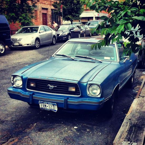 Bluecar Brooklyn Car City Collector's Car Day Ford Ford Mustang Land Vehicle Mode Of Transport Mustang New York Newyork No People Old-fashioned Outdoors Retro Styled Stationary Transportation Tree