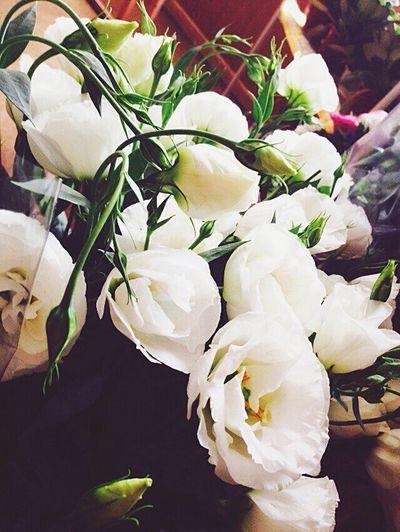 My Flowers Plants Nature китайская роза Love IT Only White