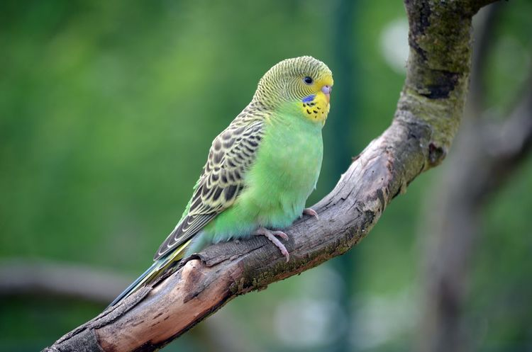 Bird Animal Themes Animals In The Wild Animal Wildlife One Animal No People Tree Outdoors Close-up Nature Day Budgie Bird Zoo