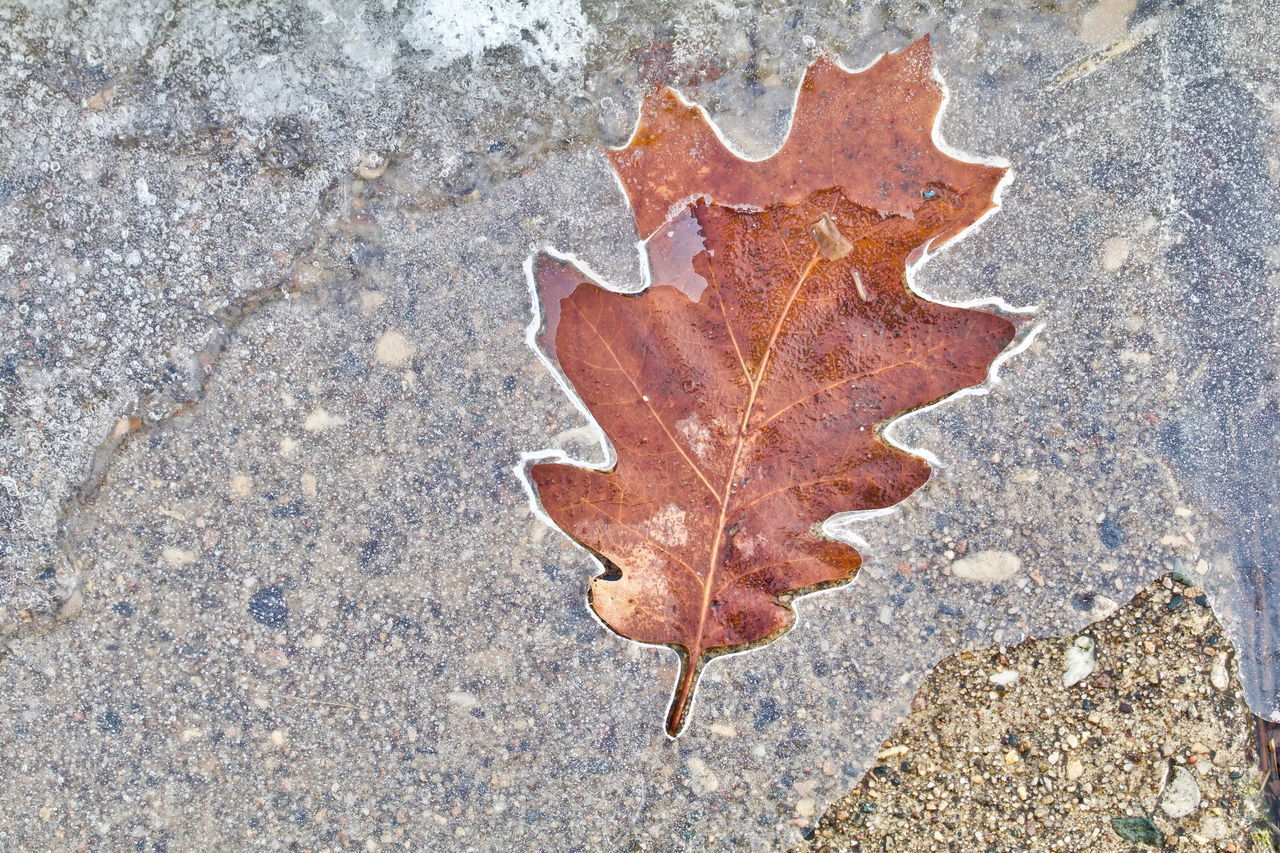 HIGH ANGLE VIEW OF AUTUMN LEAF ON FOOTPATH