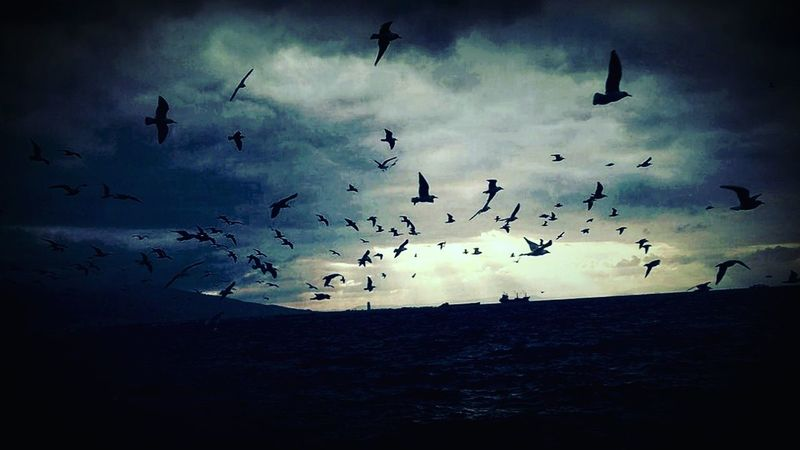 Alsancak Kordon Alsancak Black Birds Izmirkordon Izmirlife Blackheart First Eyeem Photo FirstEyeEmPic First Eyem Photo Freedom The Great Outdoors - 2017 EyeEm Awards MyPhotography