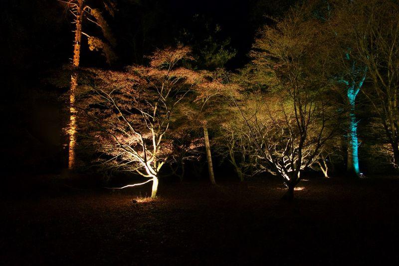 Colour & Light Illuminated Light & Dark Nature Night No People Outdoors Sky Tree Wire Wool