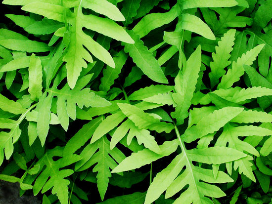 Backgrounds Beauty In Nature Close-up Day Directly Above Food Food And Drink Freshness Full Frame Green Color Growth Herb High Angle View Leaf Nature No People Outdoors Plant Plant Part Tranquility