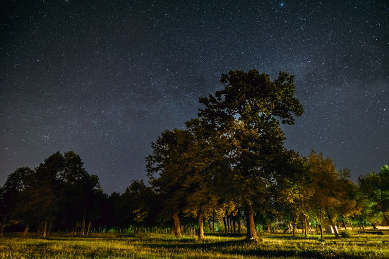 Trees Oak Woods In Park Under Night Starry Sky With Milky Way Galaxy. Landscape With Natural Real Glowing Stars Over Forest At Summer Season. View From Eastern Europe. Meteor Meteorite Shooting Star Canopy Galaxy Grass Green Light Nature Summer Exploratorium Wood Astronomy Black Cosmic Distant Environment Europe Forest Glowing Glowing Stars Landscape Many Milky Way Night Night Sky Stars Sky Space Star The Great Outdoors - 2018 EyeEm Awards The Great Outdoors - 2019 EyeEm Awards
