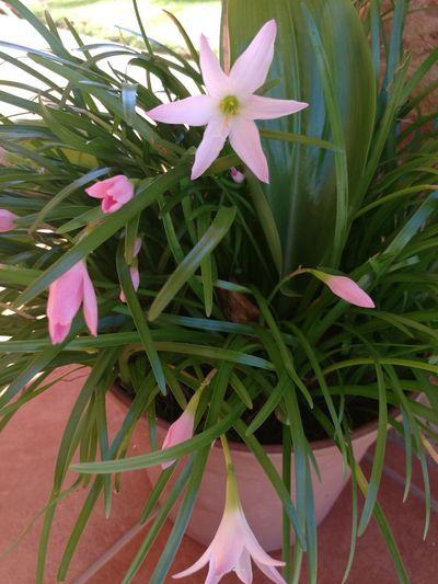 Fgugal Flower Plant