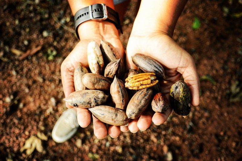Human Hand Holding Human Body Part Men One Person Lifestyles Vegetable Outdoors Nature Day Fungus Real People Close-up One Man Only Freshness Beauty In Nature People Only Men Adult Adults Only