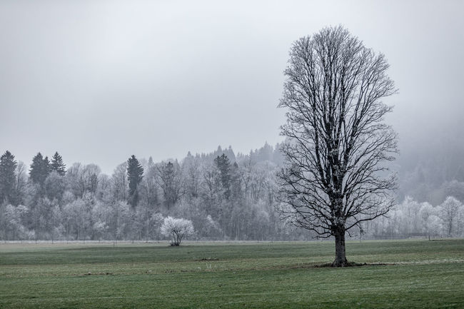 Tree Plant Fog Grass Beauty In Nature Landscape Environment Tranquility Nature Cold Temperature Field Tranquil Scene Day Land Sky Non-urban Scene Scenics - Nature No People Winter Outdoors Autumn Mood EyeEmNewHere