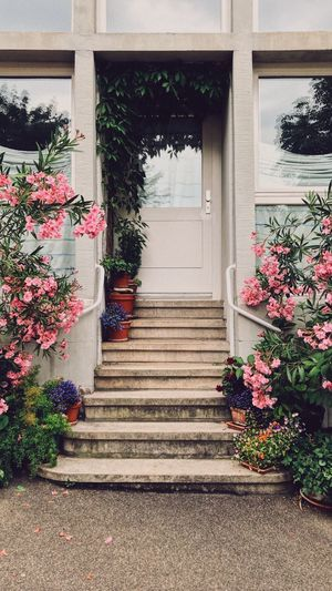 Doors of Stuttgart Old Door Wooden Door Summertime Summer Feeling Pink Flower Pink Flower Plant Architecture Building Exterior Built Structure Flower Flowering Plant No People Staircase Nature Day The Way Forward Entrance Steps And Staircases Beauty In Nature Freshness House Growth