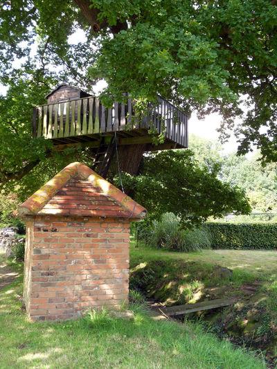 Tree Treehouse