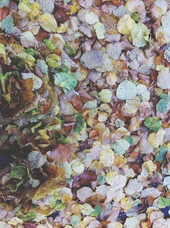 Autum Autum ♥ Dream Oktober October