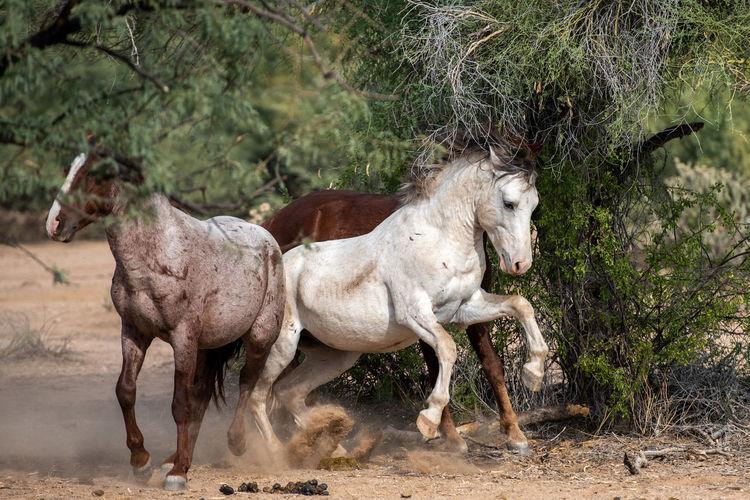 Herd of a horse