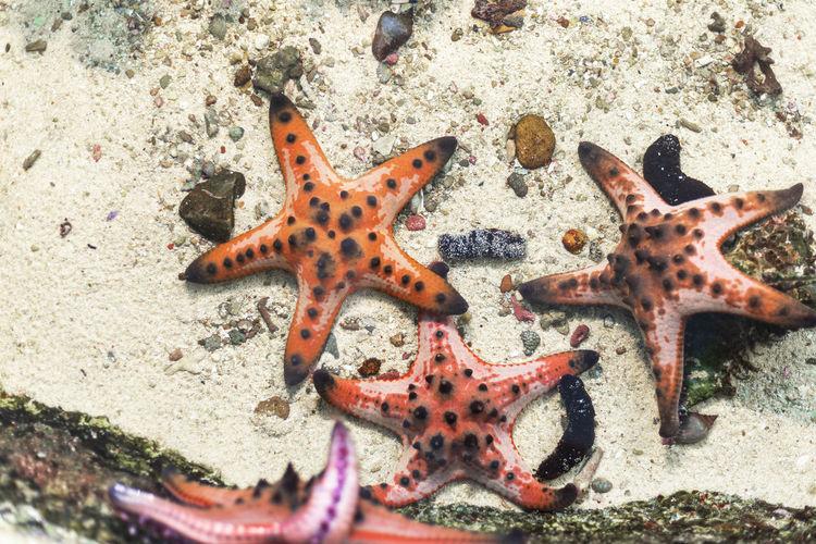 High angle view of starfish on sand