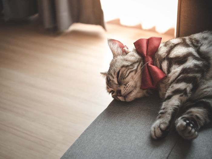 Cat sleeping in a home