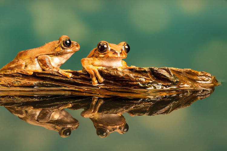 Close-up of frogs on wood in lake