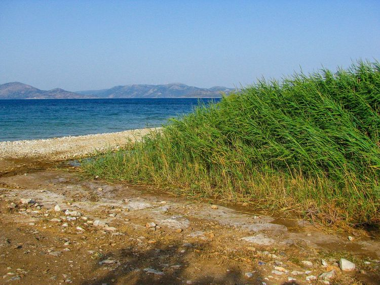 weeds on a beach Weeds Sea Blue Sea Green And Blue Water Sea Beach Clear Sky Sky Horizon Over Water