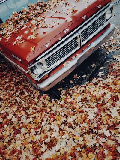 Ford Foliage