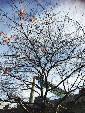 Low Angle View Nature Branch Tree Sky No People Bare Tree Outdoors Beauty In Nature Built Structure Growth Building Exterior Day Architecture 12/9, 2016☀️ 葉が落ちきって、いよいよ冬景色かな?今夜はあたたかい😊